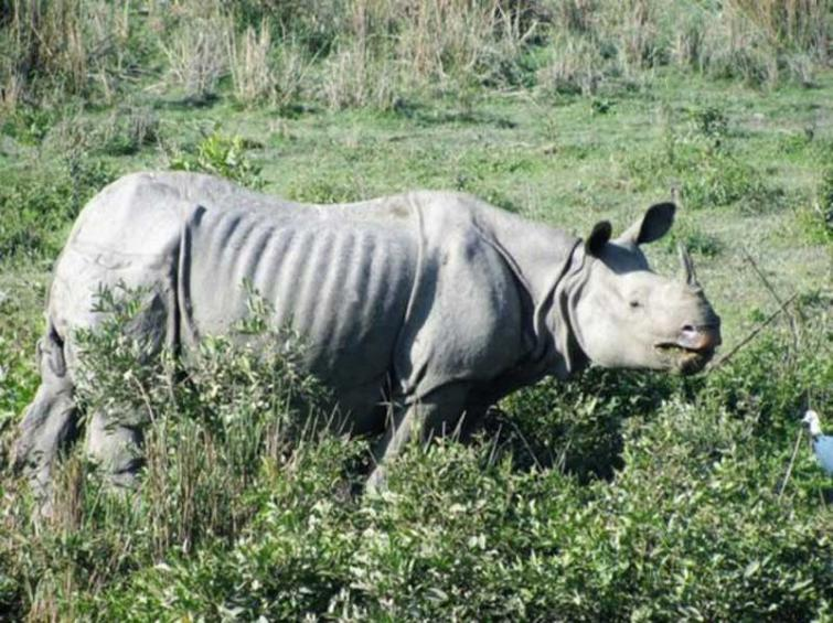 Wanted rhino poacher arrested in Assam, arms seized