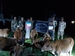BSF personnel nab two smugglers with cattle in Assam's South Salmara