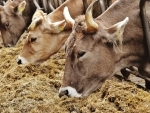 Cow sanctuary to be made in every district: Himachal Minister