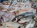 China halts fish imports from Indian firm after detecting coronavirus