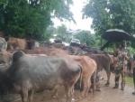 BSF seizes 118 cattles along Indo-Bangladesh border in Meghalaya