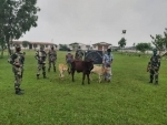 BSF official apprehend 8 cattle smugglers with nine cattle heads along Indo-Bangladesh border