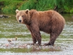 Man injured in wild bear attack in Manipur's Chandel district