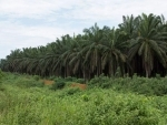 Malaysia to resolve palm oil row with India through diplomatic channels