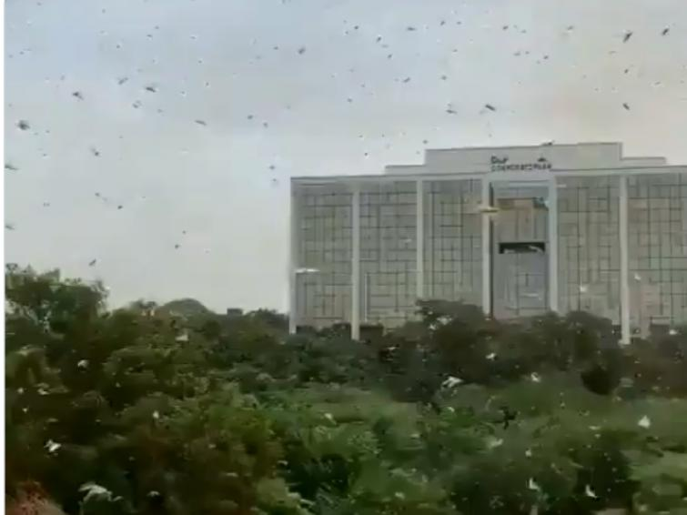 Administration on alert after locust swarms reach Gurugram, outside of Delhi