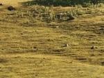Jammu and Kashmir: Government hosts soil health training program for Pulwama farmers