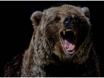 Three killed, others hospitalized as wild bear attacks villagers in Garhwa