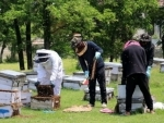 Apiculture has potential to generate employment: Kashmir's Director Agriculture