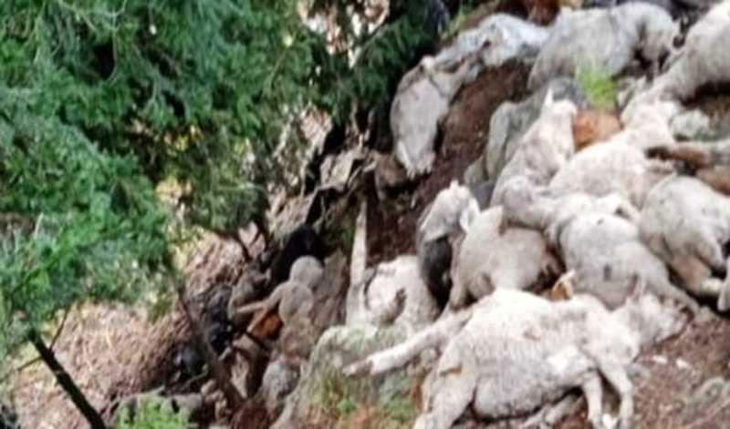 2 nomads injured, dozens of sheep killed in cloudburst in Ganderbal today