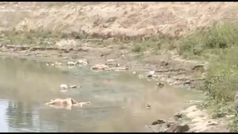 Decomposed bodies wash up on banks of Ganga in Bihar, creates panic amid Covid