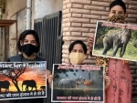 Headline: People demand justice for the killing of pregnant elephant in Kerala