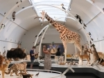People take photos of the exhibits at the Museum of Royal Belgian Institute of Natural Sciences in Brussels