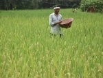 Farmer works on paddy field in Ranchi