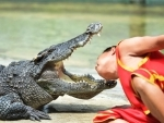 Man puts his head between gaping fangs of crocodile during show in Bangkok Zoo