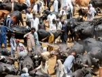 Pakistan: People visit a livestock market ahead of the Eid al-Adha festival