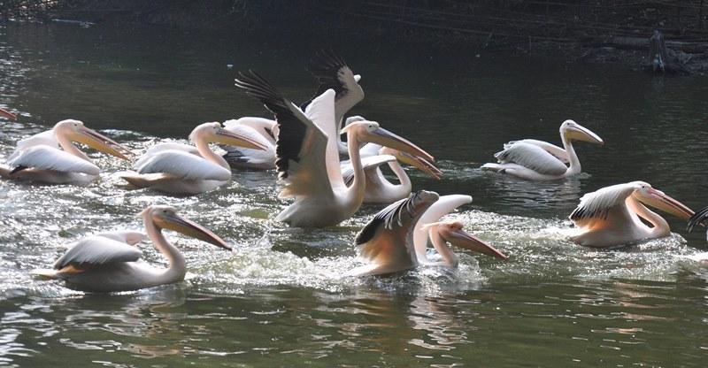 Assam state zoo in Guwahati