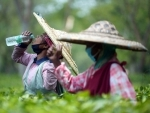 Tea garden worker quenching her thirst