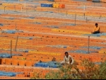 Ghats in Prayagraj don deserted look amid Covid lockdown