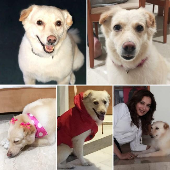 Madhuri Dixit grieves loss of her dog Riya