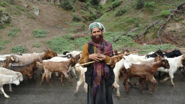 Cold September leads nomadic Gujjars-Bakkarwals to prepone annual tribal migration