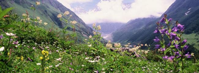 Valley of Flowers national park of Uttarakhand to open on June 5