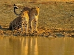 Cinnamon Hotels & Resorts showcases Sri Lanka's natural world as sustainable tourism product