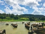 Sri Lanka eyeing 7 million tourists by 2025