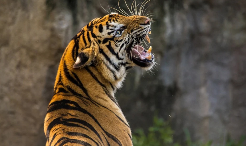 India's iconic Jim Corbett National Park records highest density of tigers in world