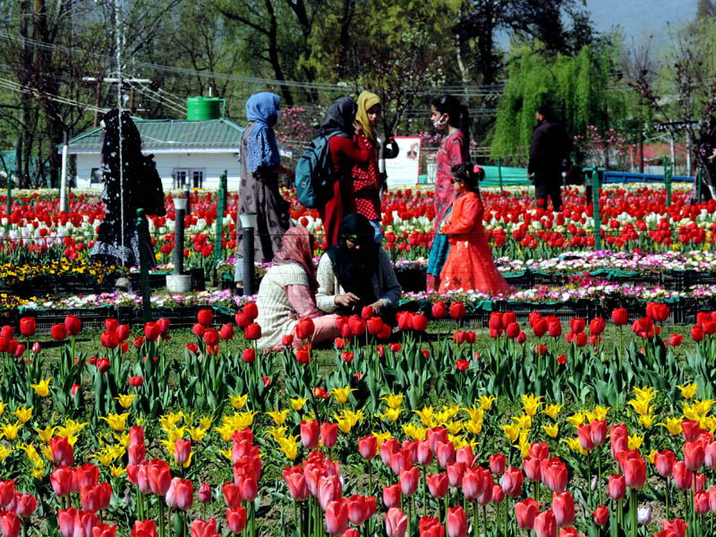 Jammu and Kashmir: 6-day long Tulip Festival enlivens Srinagar