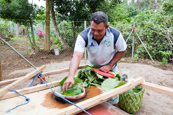 Samoa: From weeds to electricity, UN partnership aims to connect families to electric grid