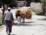 UN and partners report 'extremely alarming' food insecurity figures in Afghanistan