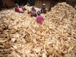 Food prices are staying lower for longer periods: UN agency