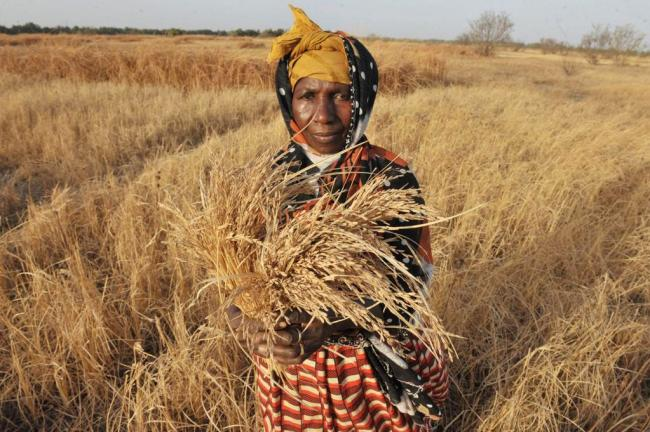 Joint UN report says rate of world hunger dropping amid wider eradication efforts