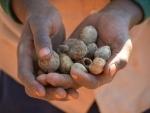 Zimbabwe facing worst malnutrition rates in 15 years – UNICEF