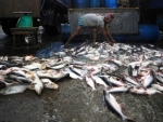 UN agency announces world's first illegal fishing treaty now in force