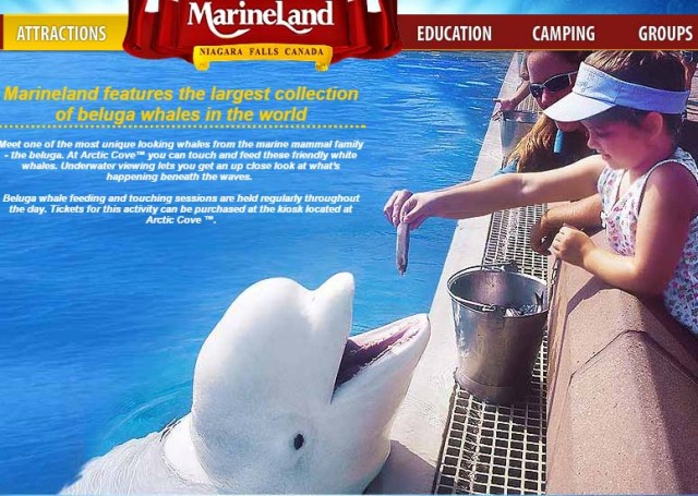 Marineland in Niagara Falls accused of animal cruelty, counters charges