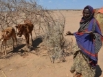 Drought drives food price spike in East Africa, UN warns