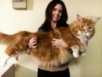Giant feline breaks the internet, to be named the world's longest cat by Guinness