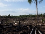 Ongoing forest destruction has put Asia-Pacific at risk of missing global development targets – UN agency