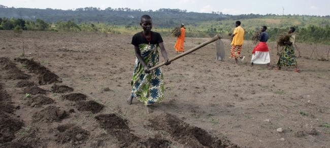Job creation around agriculture can spur youth employment in Africa – UN agency