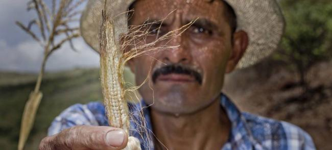 Central America: drought, resulting crop losses threaten food security of two million people, UN warns