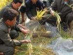 DPR Korea: UN says $111 million needed to provide life-saving aid, tackle malnutrition