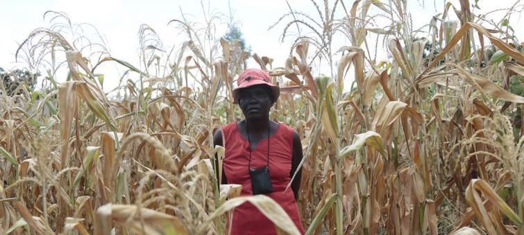 Zimbabwe 'facing worst hunger crisis in a decade'