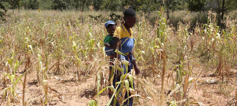 Zimbabwe facing man-made starvation, says UN expert