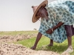Sub-Saharan Africa faces grave hunger challenges in 2020: UN food relief agency