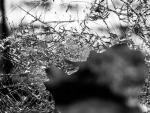 Bangladesh: Road mishap kills 6 in Dinajpur