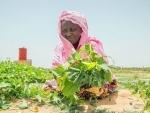 UN chief announces major push to transform harmful food systems