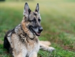'Champ' the beloved German Shephard of Bidens dies; US President, First Lady say 'we will miss him'